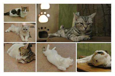 Cat_cafe