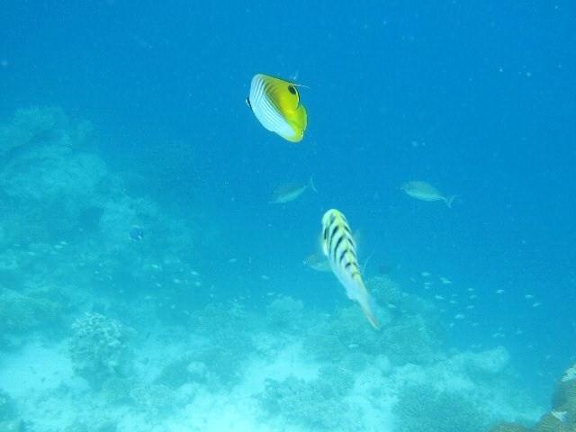 maldives28