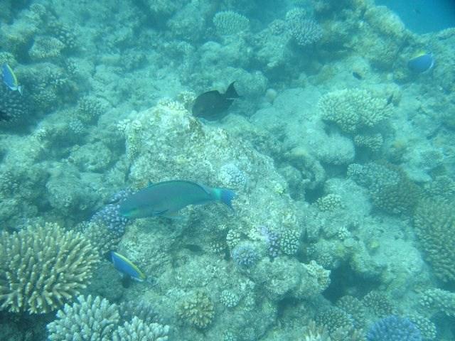 maldives29