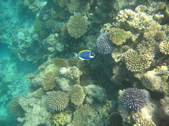 maldives32