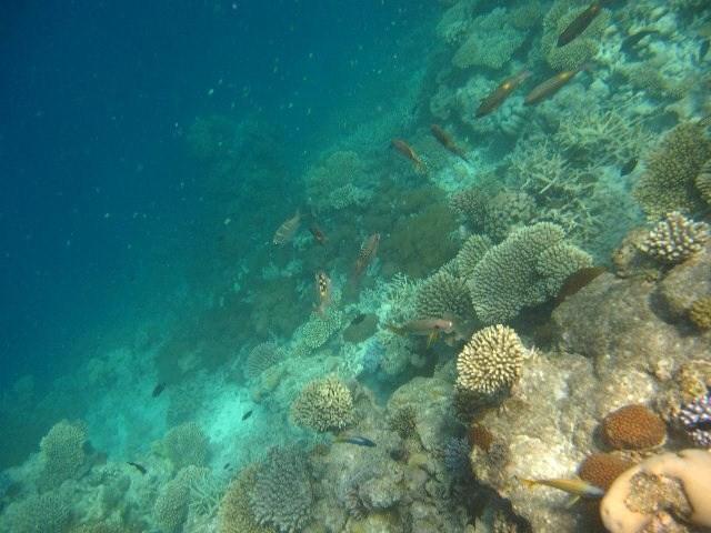 maldives35